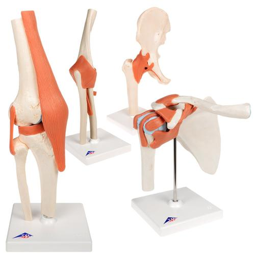 Anatomy Set Joints Luxury, 8000834, Joint Models