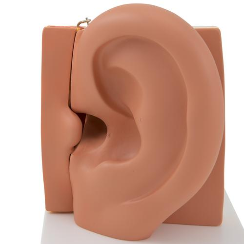 Human Ear Model, 3 times Life-Size, 6 part - 3B Smart Anatomy, 1000251 [E11], Ear Models