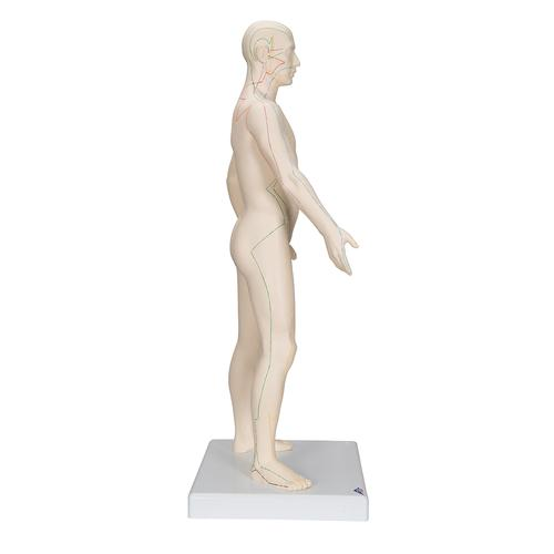 Acupuncture Model, male, 1000378 [N30], Acupuncture Charts and Models