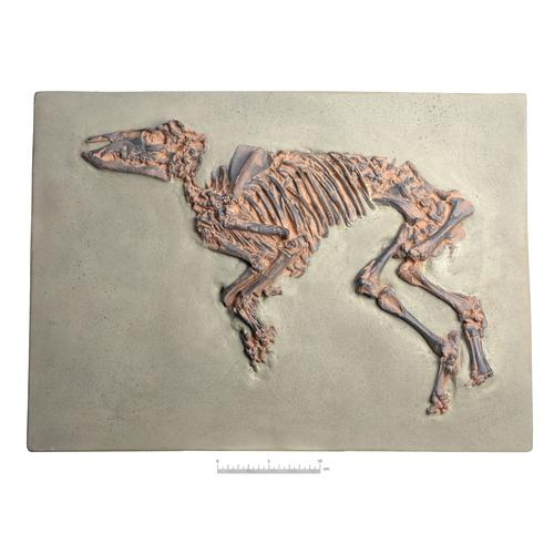 Proto-Horse Fossil, (Propalaeotherium messelense), Replica, 1021242 [U75040], Fossils