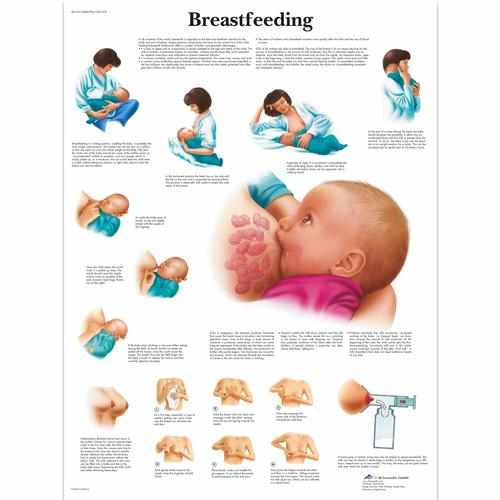 Breastfeeding Chart, 4006706 [VR1557UU], Pregnancy and Childbirth