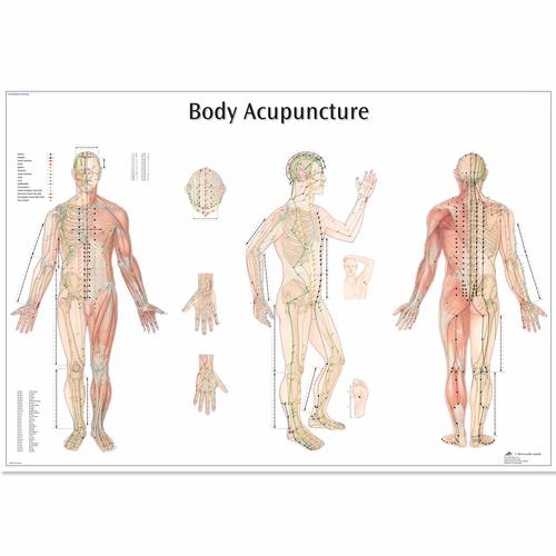Body Acupuncture Chart, 4006730 [VR1820UU], Acupuncture