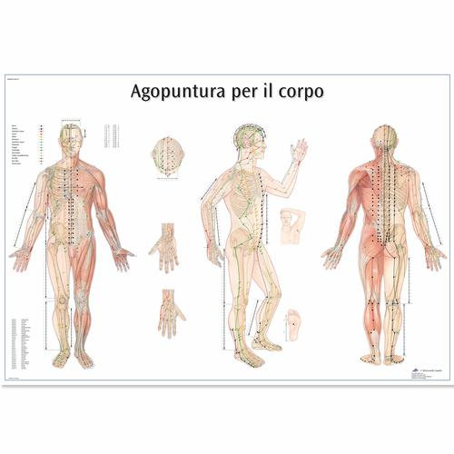 Agopuntura por il corpo, 4006982 [VR4820UU], Acupuncture Charts and Models