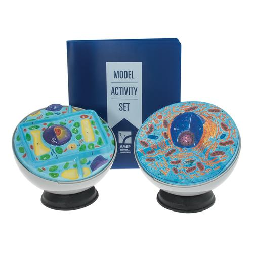 Plant and Animal Cell Model Activity Set, 1005486 [W40223], Human and Animal Cell