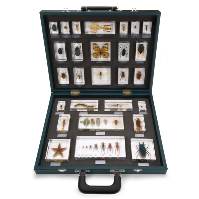 "Teaching Case ""27 Invertebrates (Invertebrata)"", 1005970 [W59550], Embedded Specimens"