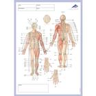 Meridian notepad, 1002440, Acupuncture accessories