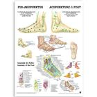 Acupuncture of the Foot (German/English)&#x3b; paper version, 50 x 70 cm, 1003629, Acupuncture