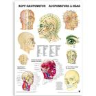 Acupuncture of the Head (German/English)&#x3b; laminated deluxe version, 50 x 70 cm, 1003630, Acupuncture supplies