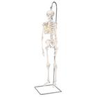 Mini Human Skeleton - Shorty - on hanging stand, 1000040 [A18/1], Mini Skeleton Models