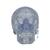 Transparent Classic Human Skull Model, 3 part - 3B Smart Anatomy, 1020164 [A20/T], Human Skull Models (Small)