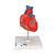 Classic Human Heart Model, 2 part - 3B Smart Anatomy, 1017800 [G08], Human Heart Models (Small)