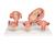 Pregnancy Models Series, 5 Embryo & Fetus Models on a Base - 3B Smart Anatomy, 1018633 [L11/9], Human (Small)