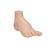 Hollow Foot (Pes Cavus) Model - 3B Smart Anatomy, 1000356 [M32], Joint Models (Small)