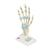 Hand Skeleton Model with Ligaments & Carpal Tunnel - 3B Smart Anatomy, 1000357 [M33], Joint Models (Small)