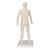 Acupuncture Model, male, 1000378 [N30], Acupuncture Charts and Models (Small)