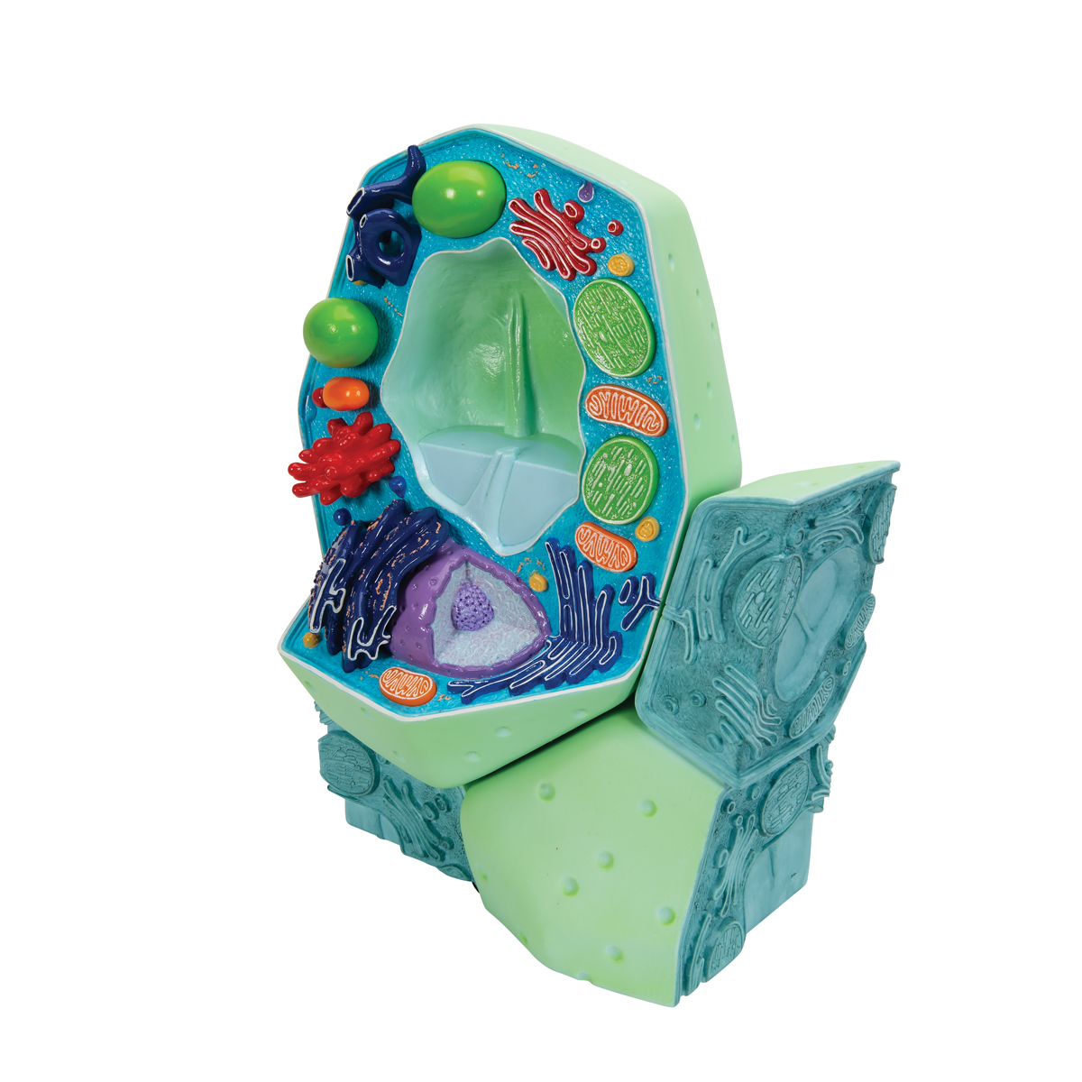 Ribosomes In A Plant Cell Plant Cell Model | Pla...
