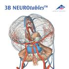 3B NEUROtables™ in English, 1002493 [S0190], Brain Models