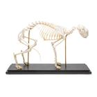 Cat Skeleton (Felis catus), Rigidly Mounted,T30028
