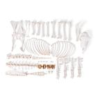 Sheep skeleton (Ovis aries), female, disarticulated, 1021026 [T300361fU], Osteology