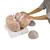 Giant Human Brain Model, 2.5 times Full-Size, 14 part - 3B Smart Anatomy, 1001261 [VH409], Brain Models (Small)