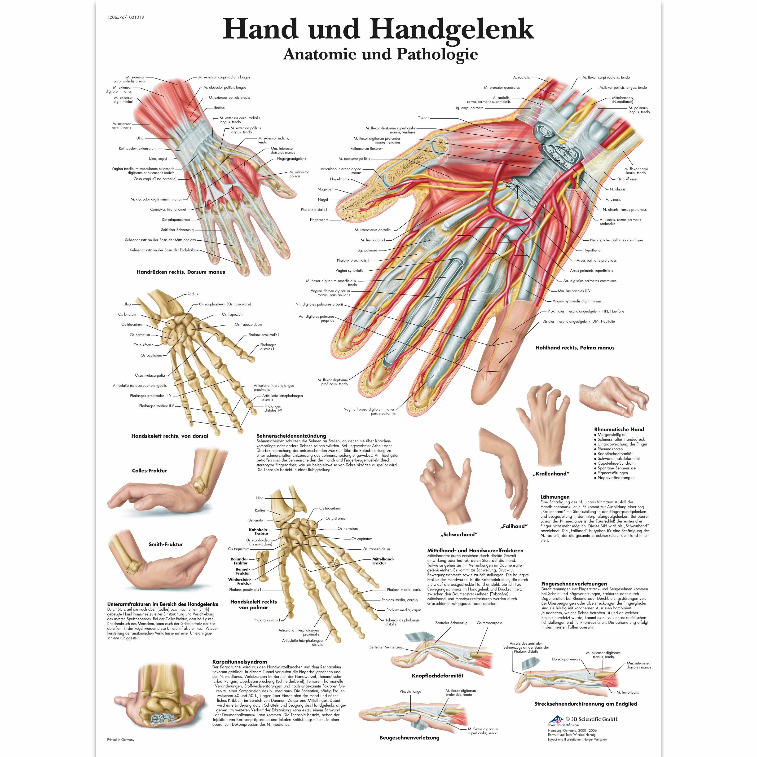 Groß Hand Und Handgelenk Anatomie Galerie - Physiologie Von ...