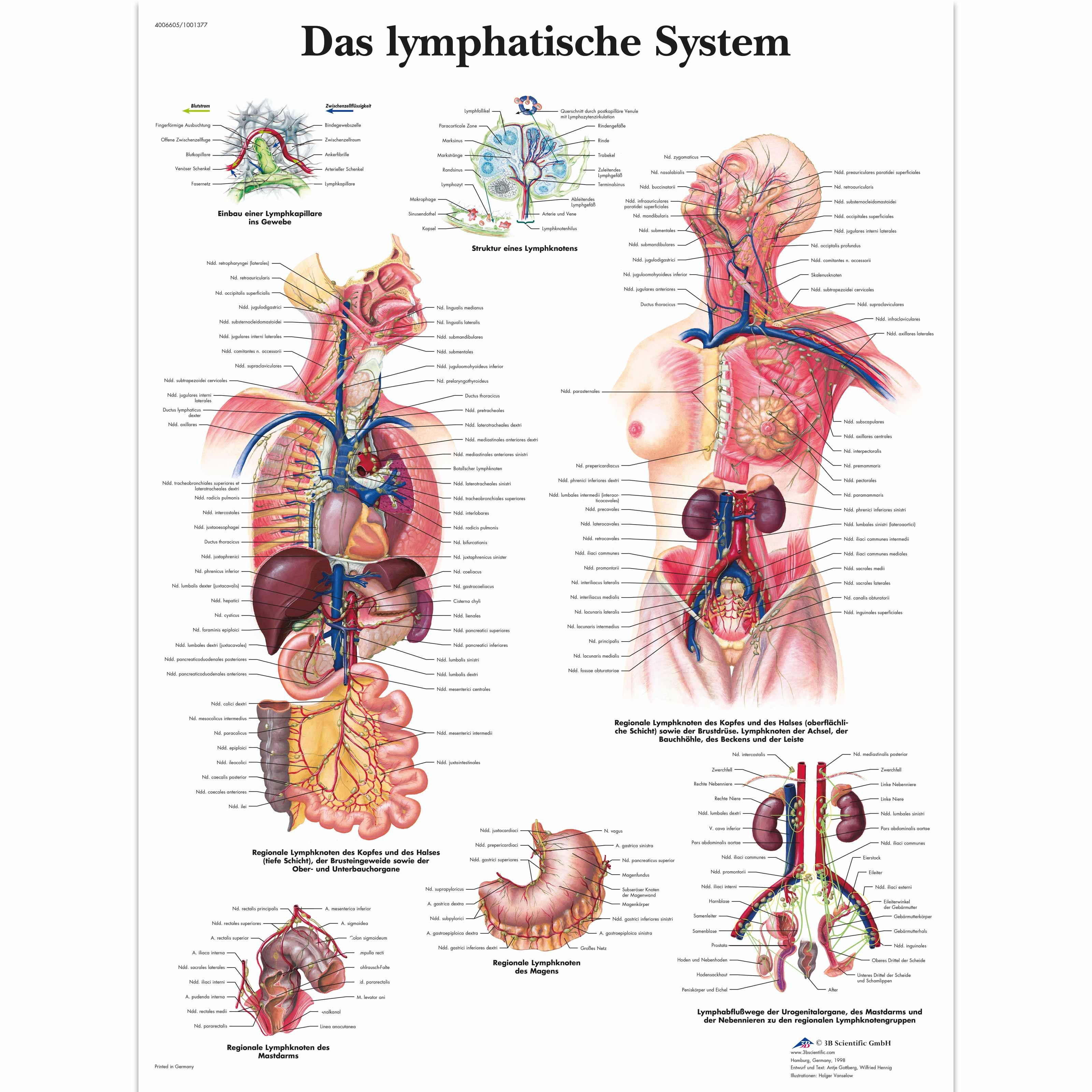 Das Lymphatische System 1001377 Vr0392l The Lymphatic System