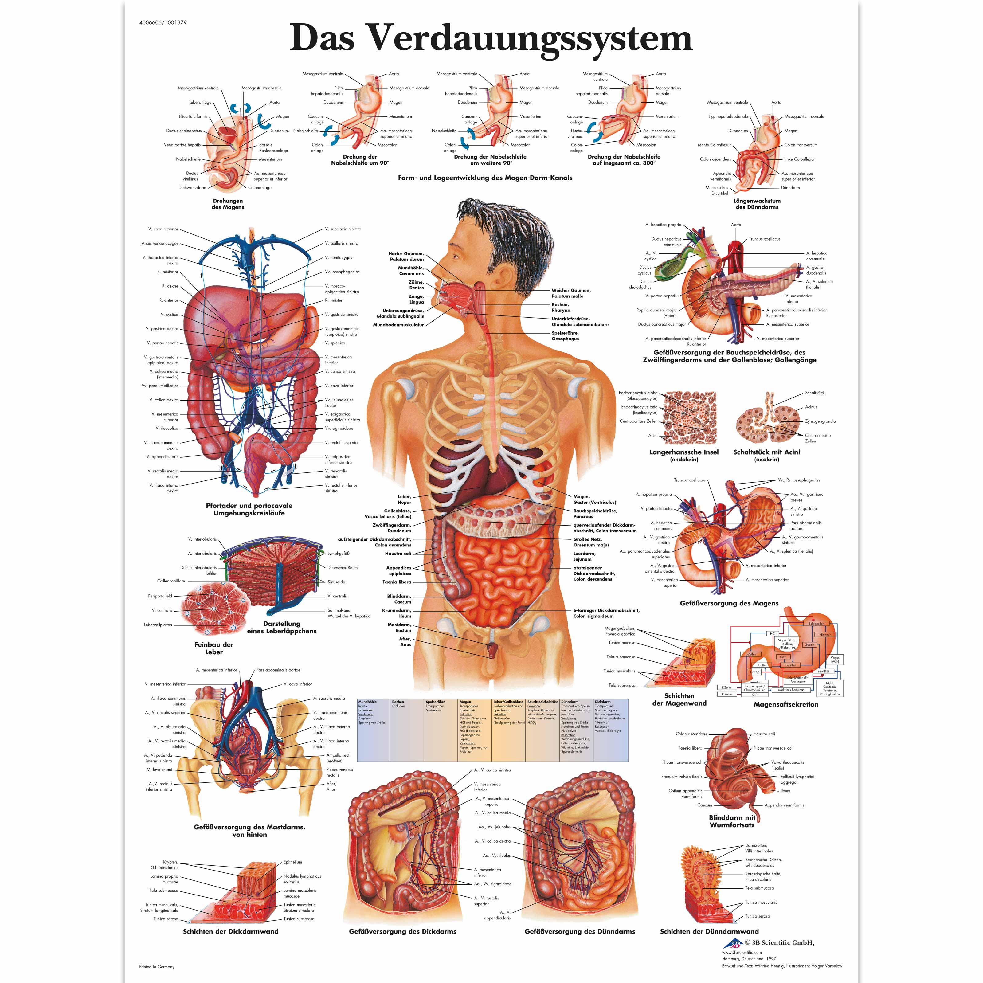 Das Verdauungssystem - 4006606 - VR0422UU - Digestive System - 3B ...