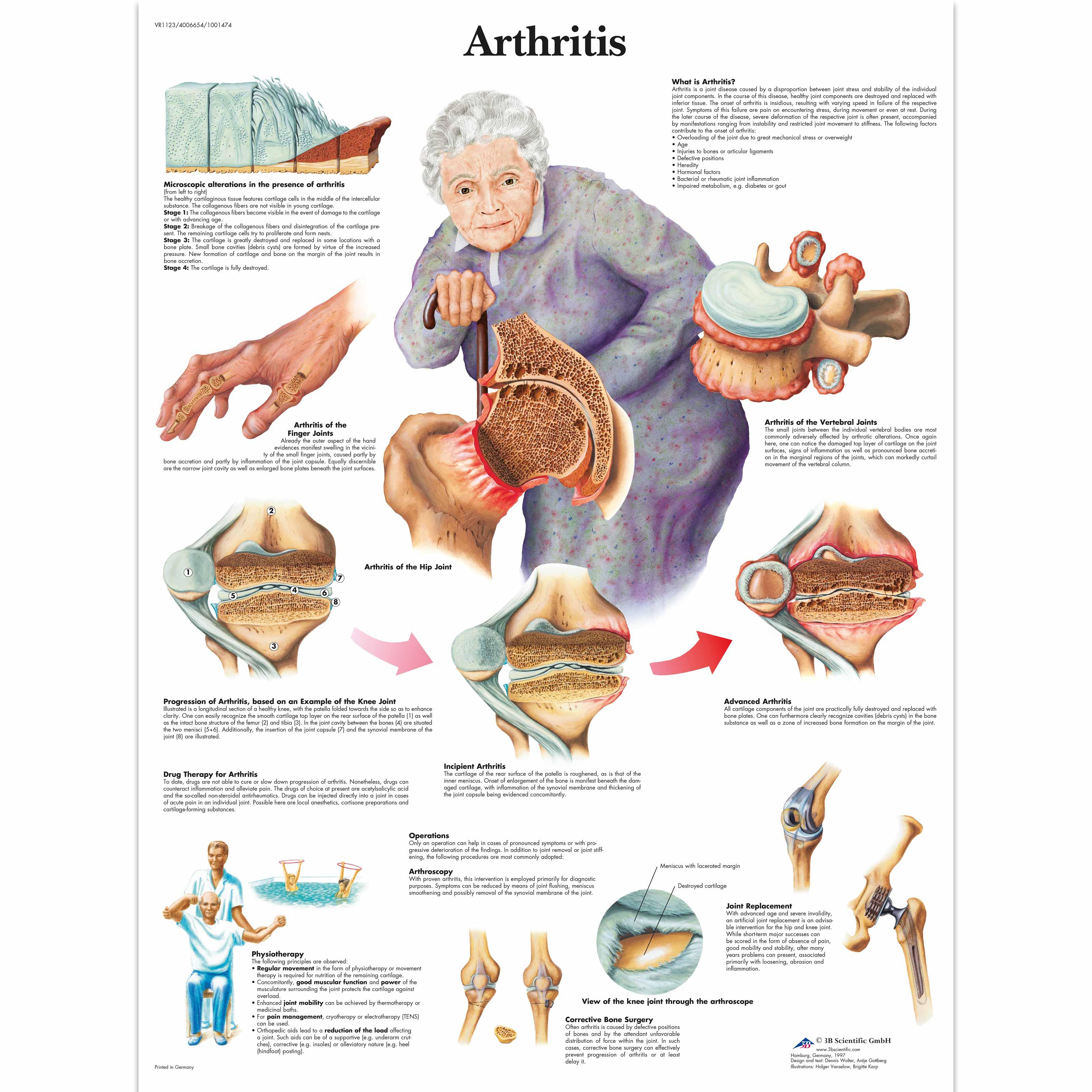 Anatomical Charts And Posters - Anatomy Charts
