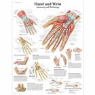 Hand and Wrist Chart - Anatomy and Pathology, 4006659 [VR1171UU], Skeletal System