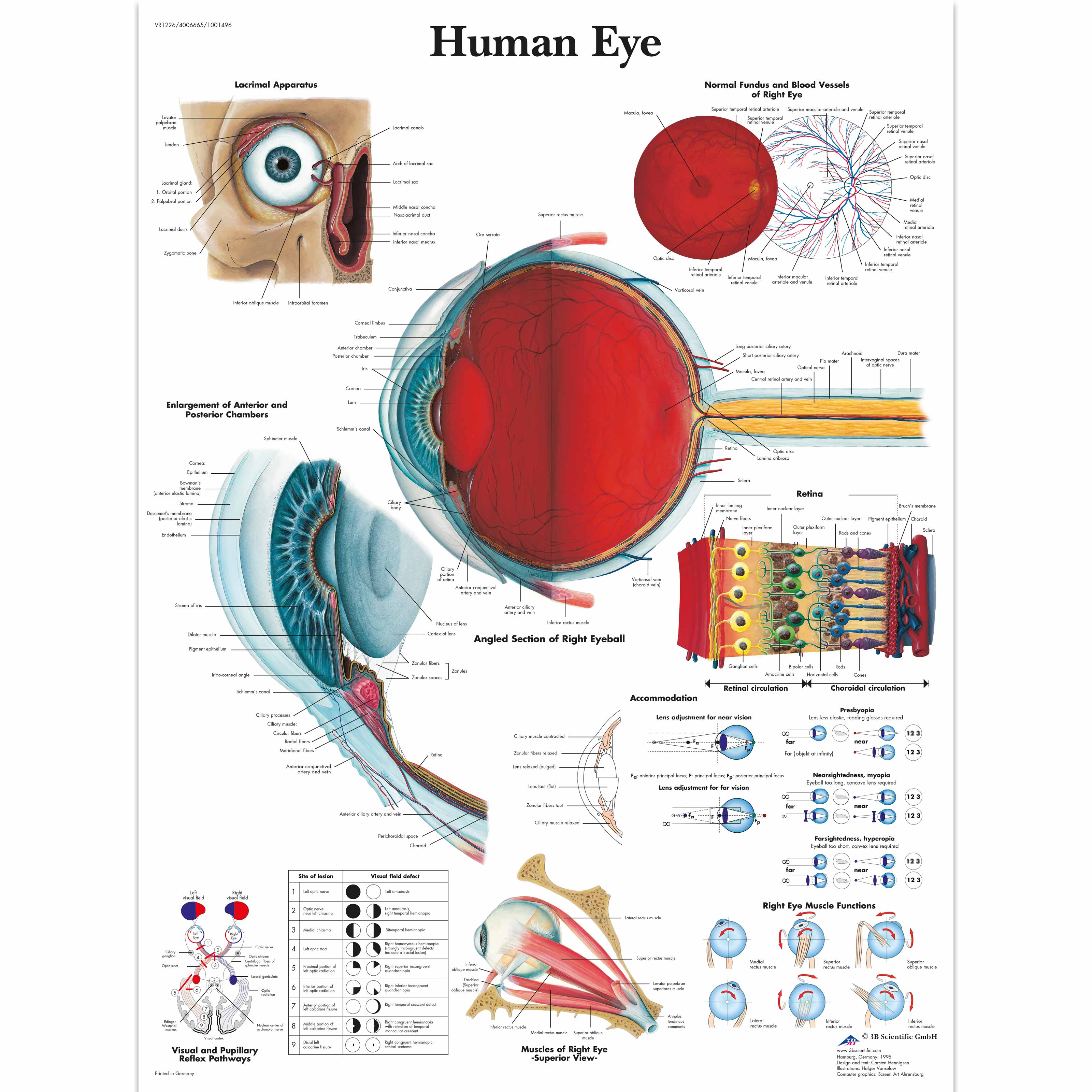 Human Eye Chart 1001496 Vr1226l Ophthalmology 3b Scientific