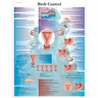 Birth Control Chart, 4006707 [VR1591UU], Gynaecology