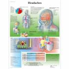Headaches Chart, 1001604 [VR1714L], Brain and Nervous system