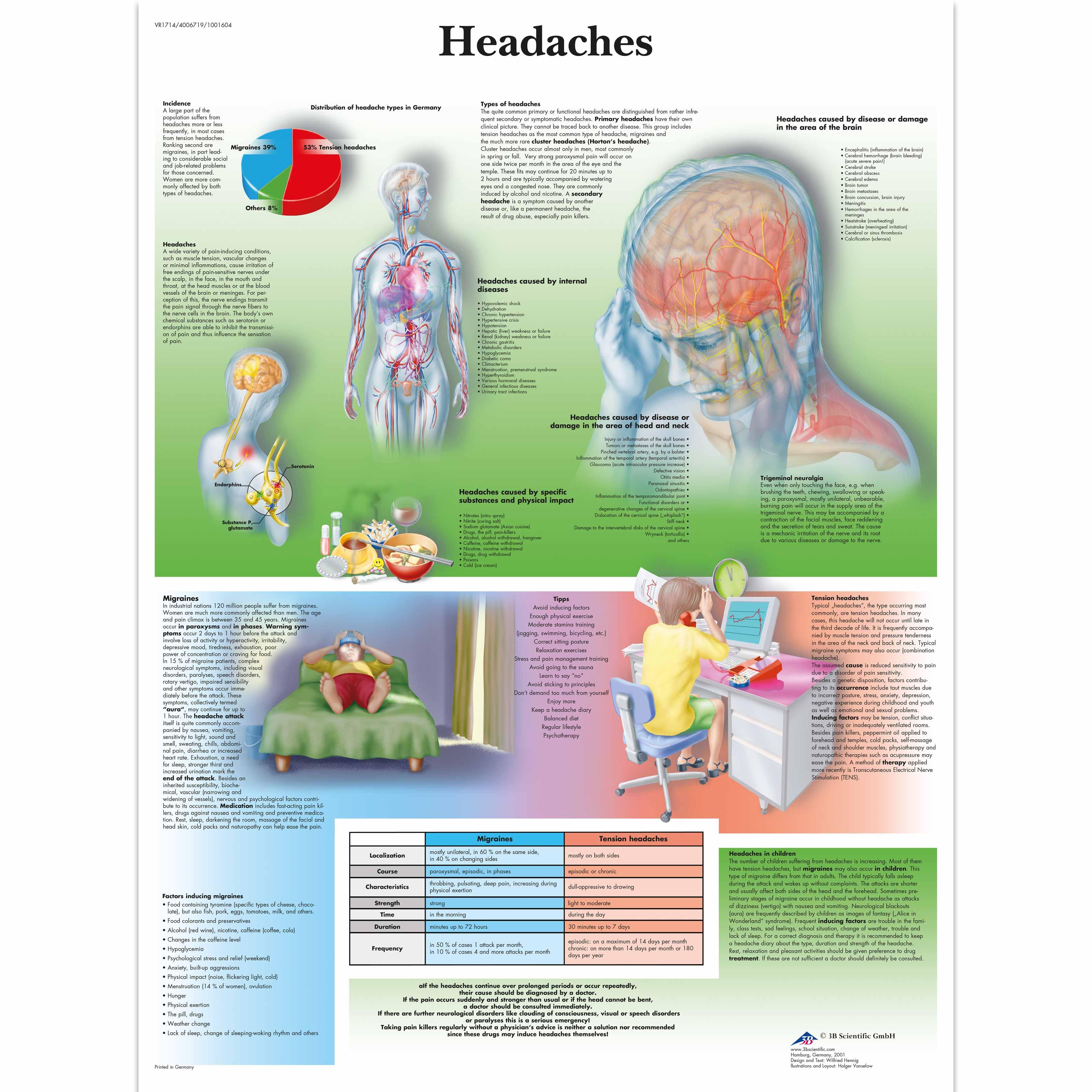 Anatomical Charts Neurological Posters Pathology