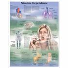 Nicotine Dependence Chart, 1001622 [VR1793L], Tobacco Education
