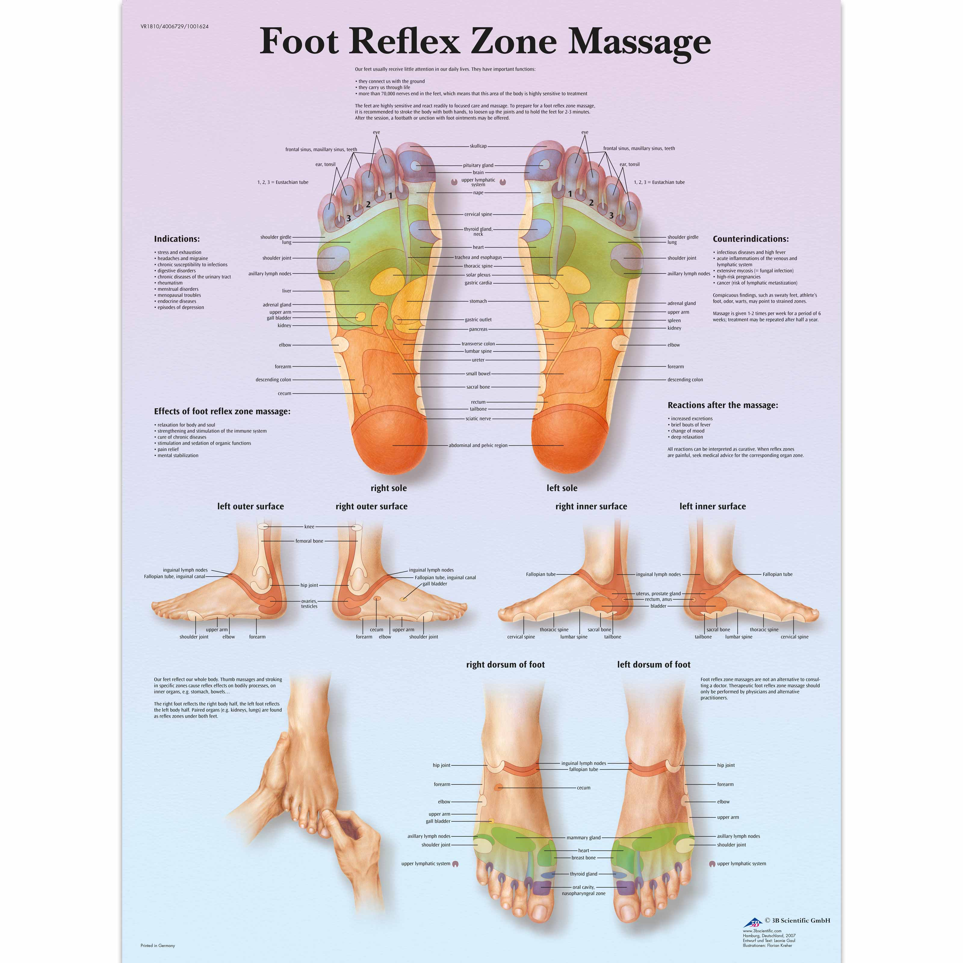 Anatomical Charts and Posters - Anatomy Charts - Foot Reflex Zone ...