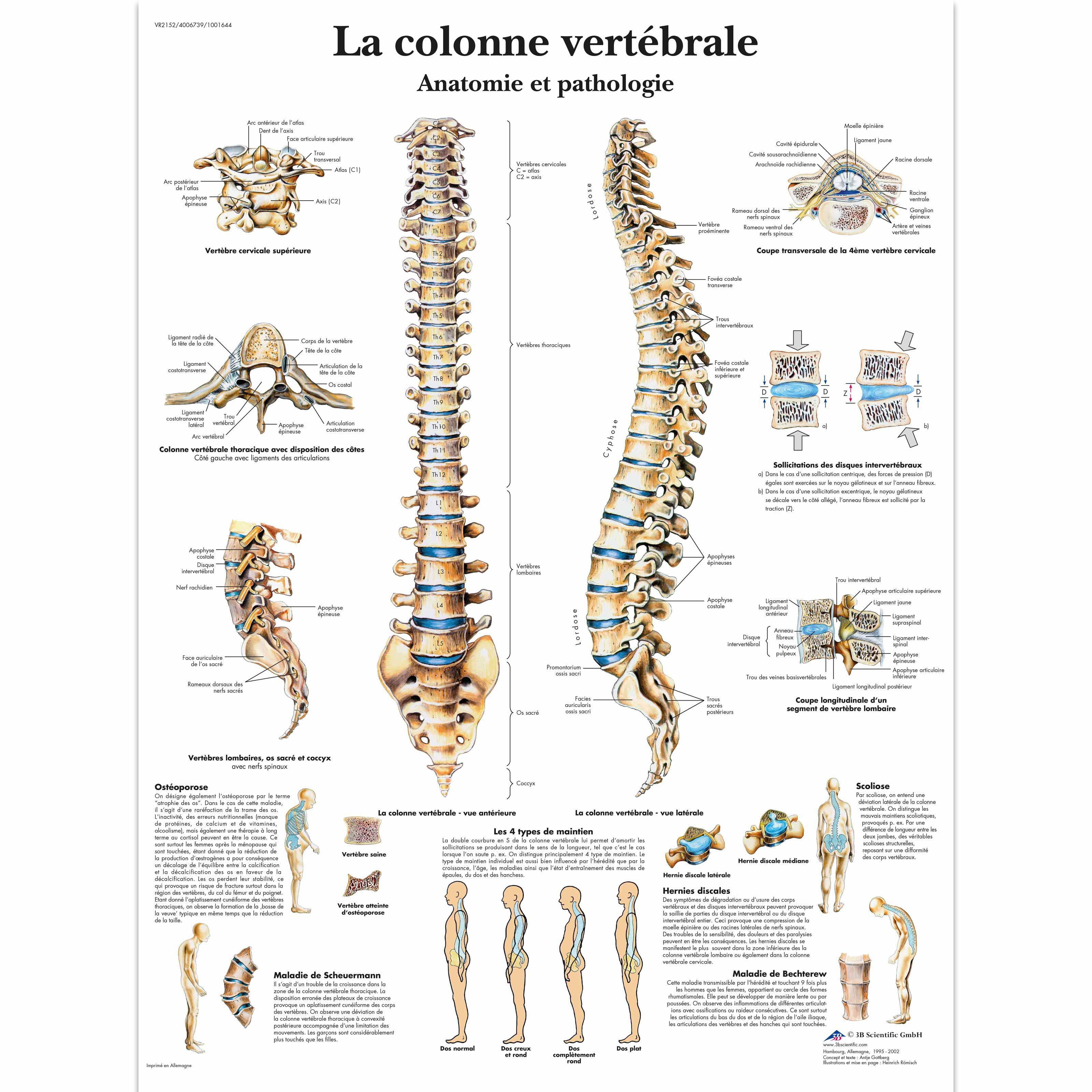 La colonne vertébrale, Anatomie et pathologie - 4006739 - VR2152UU ...
