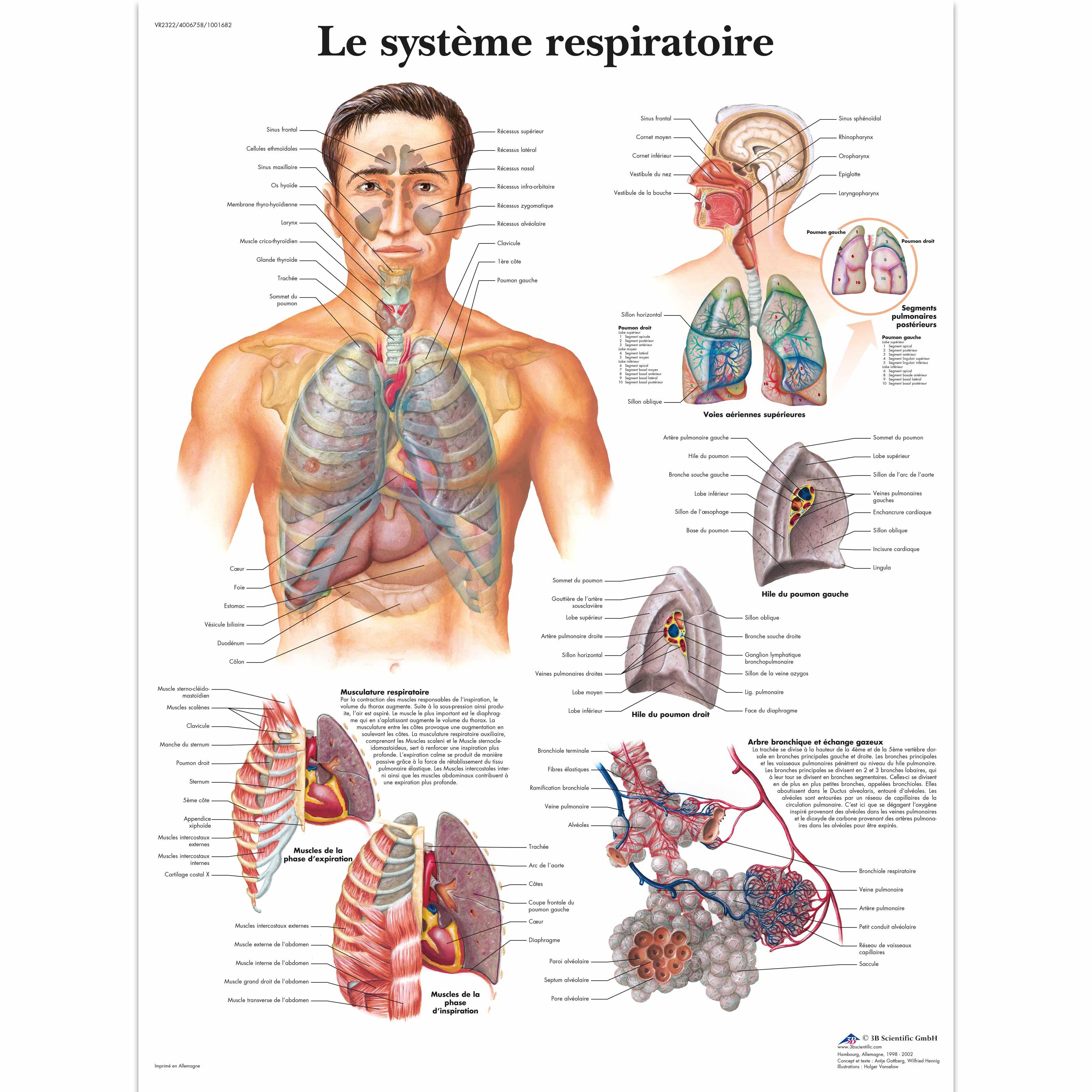 Fein Anatomie Und Physiologie Systeme Fotos - Menschliche Anatomie ...
