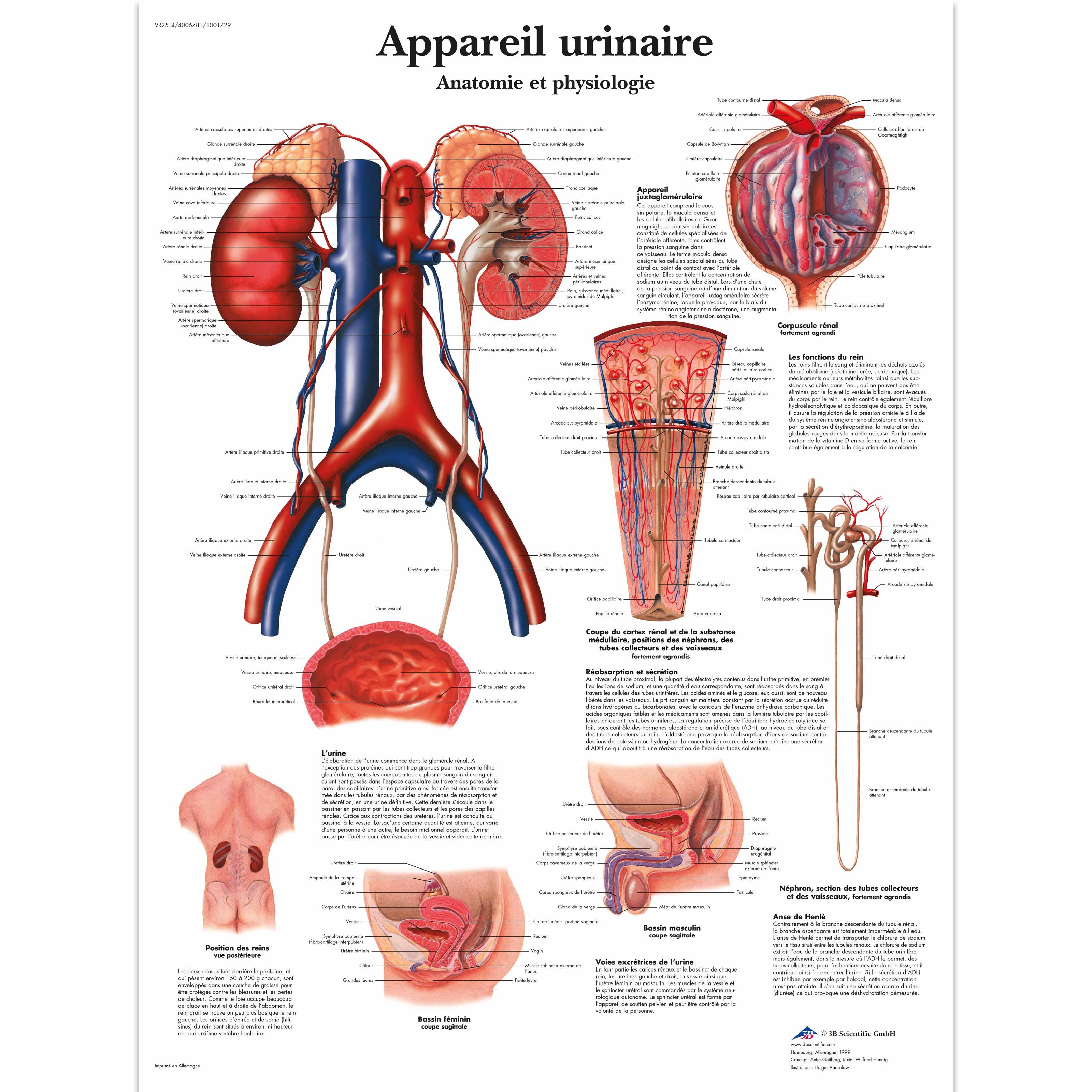 Großzügig Menschliche Anatomie Und Physiologie Mckinley Fotos ...