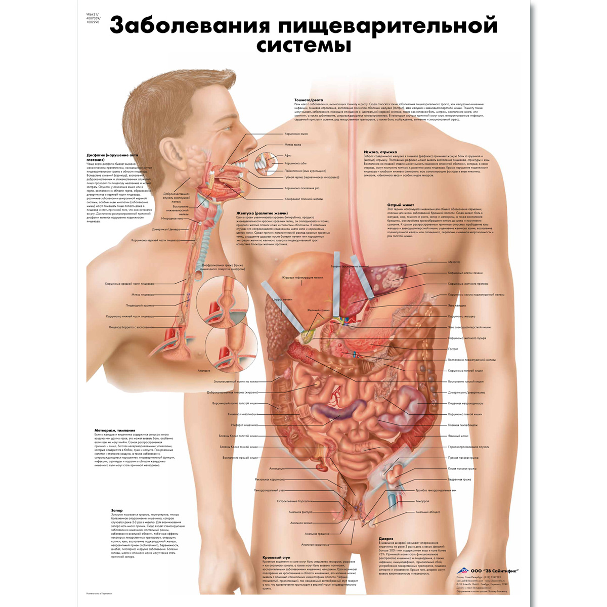 Diseases Of The Digestive System Chart 1002290 Vr6431l
