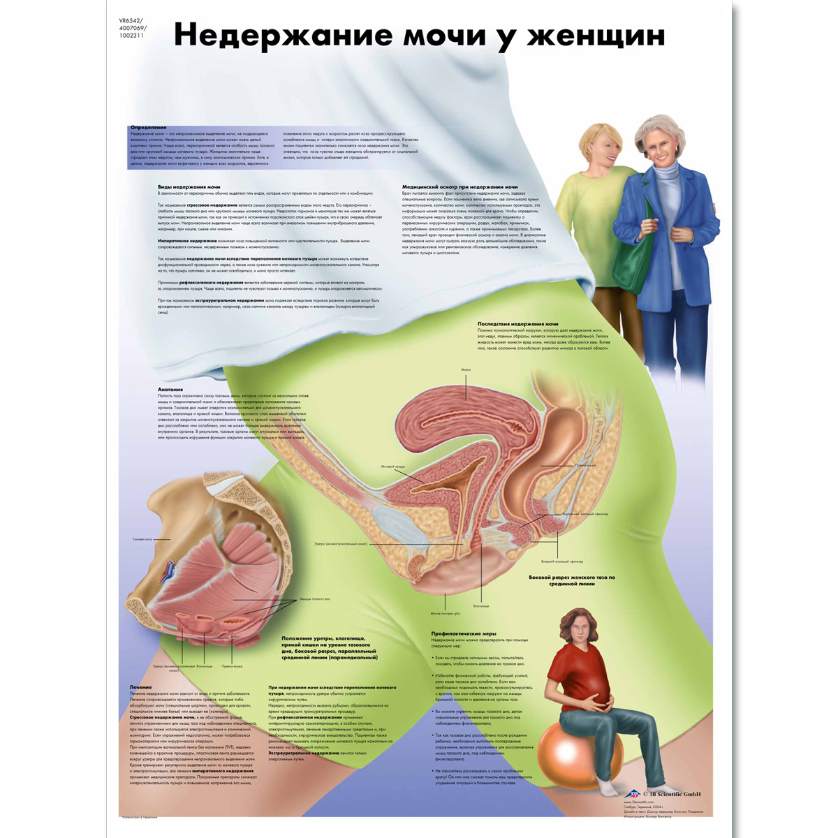 Female urinary incontinence chart 1002311 vr6542l zvr6542l female urinary incontinence chart geenschuldenfo Images