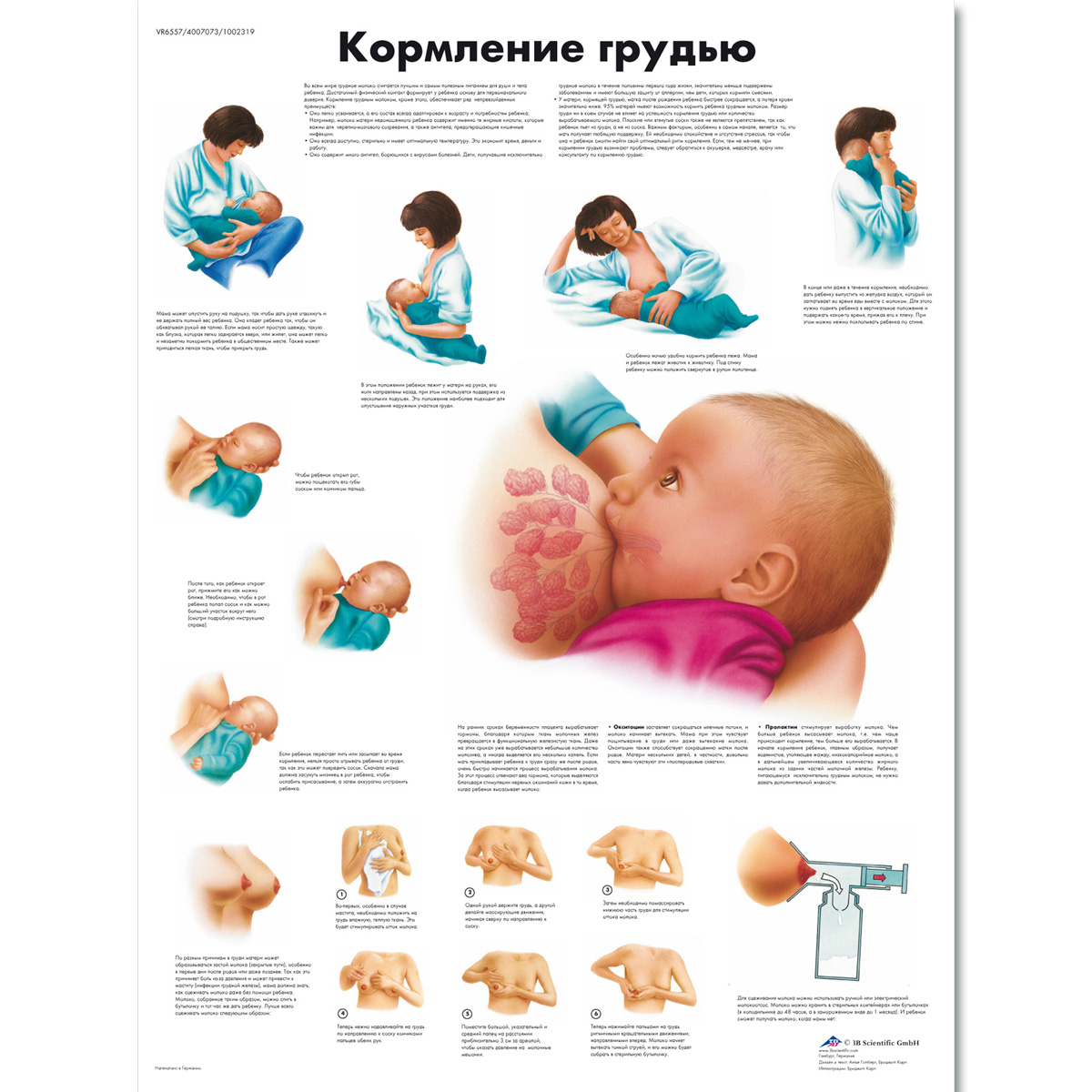 Breastfeeding chart 1002319 vr6557l zvr6557l pregnancy and breastfeeding chart nvjuhfo Image collections