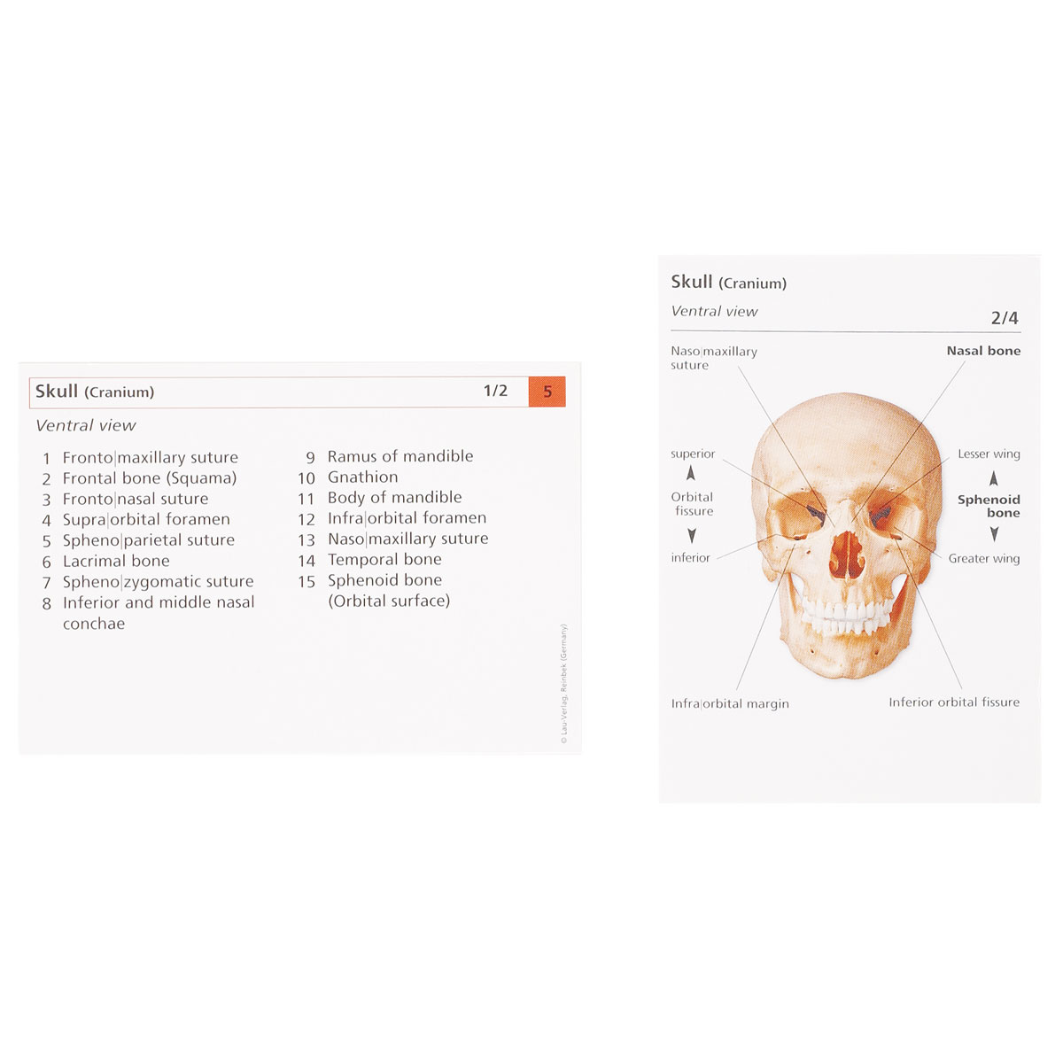 Human Anatomy Flash Cards The Skeletal System 1003743 W11505