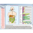Feeding organs and metabolism in the human body, Interactive CD-ROM, 1004275 [W13506], Biology Software