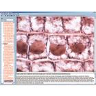 Cytology and Molecular Biology, Interactive CD-ROM, 1004287 [W13518], Biology Software