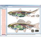 Zoology in the Classroom, Interactive CD-ROM, 1004292 [W13523], Biology Software