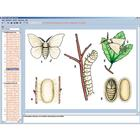 The World of Butterflies, CD-ROM, 1004306 [W13537], Biology Learning Systems