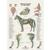Poster Horse, 6pages, 1021858 [W16300], Internal medicine (Small)