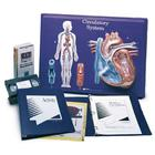 Circulatory System Model Activity Set, 1005475 [W40206], Anatomy Activity Sets