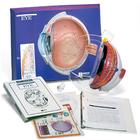 Eye Model Activity Set, 1005476 [W40207], Eye Models