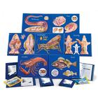 7 Model Activity Sets Zoology, 1005490 [W40230], Biology Supplies